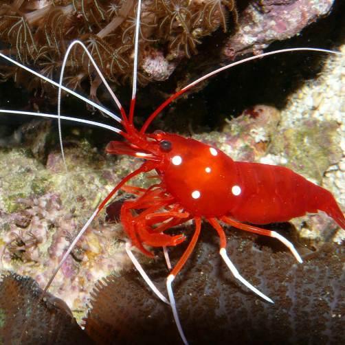 Invertebrati e coralli