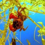 La bottega dell'acquario Genova (11)