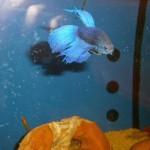 La bottega dell'acquario Genova (12)