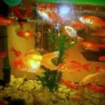 La bottega dell'acquario Genova (13)