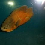 La bottega dell'acquario Genova (15)