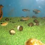 La bottega dell'acquario Genova (16)