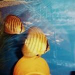 La bottega dell'acquario Genova (20)