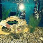 La bottega dell'acquario Genova (23)