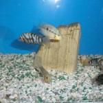 La bottega dell'acquario Genova (6)