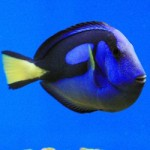 Pesci marini genova