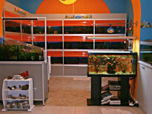 Negozio acquari a genova for Acquari usati in vendita